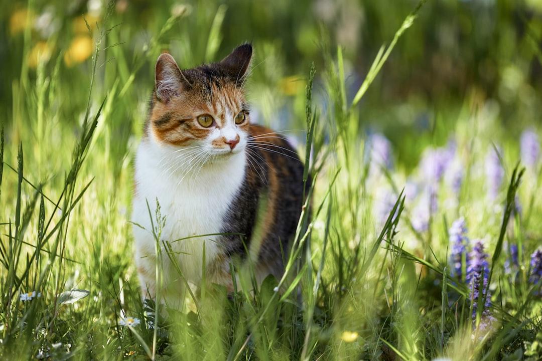 A beautiful cat in the grass