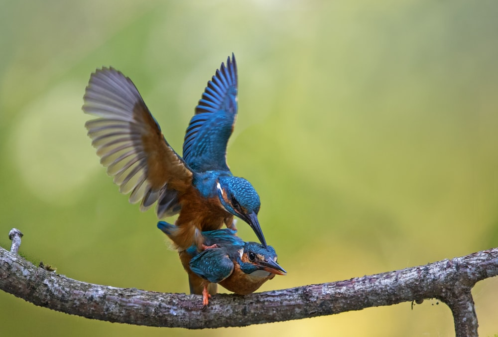 blue and brown bird flying during daytime