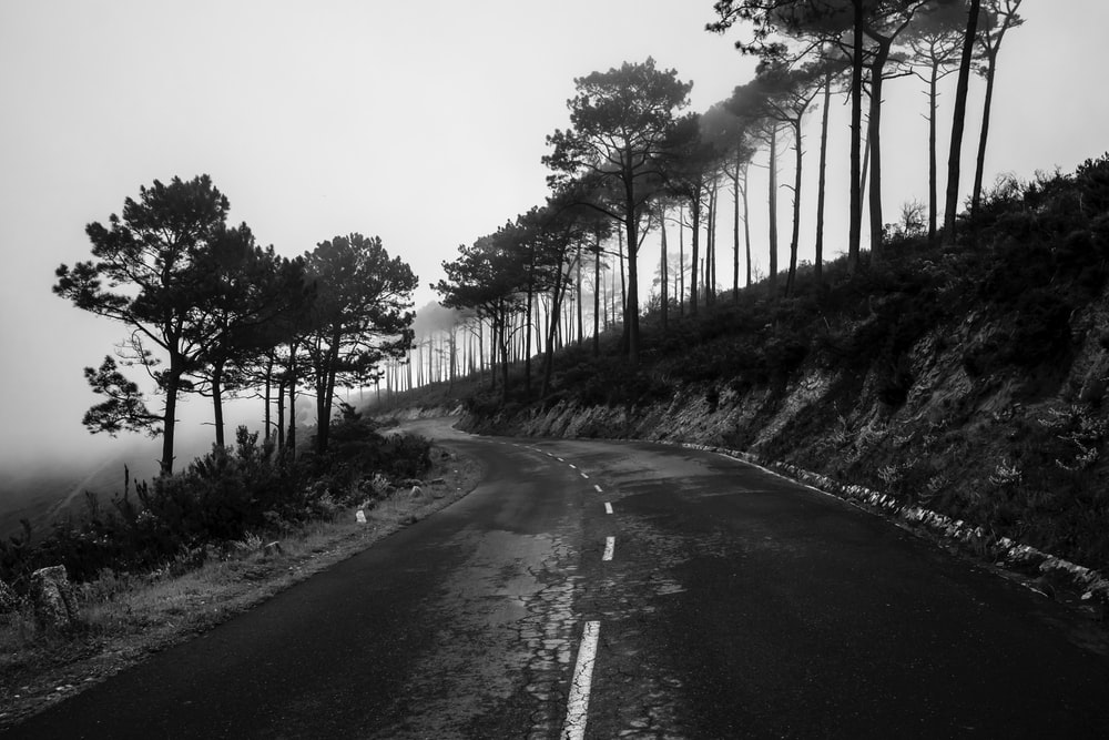 grayscale photo of road between trees