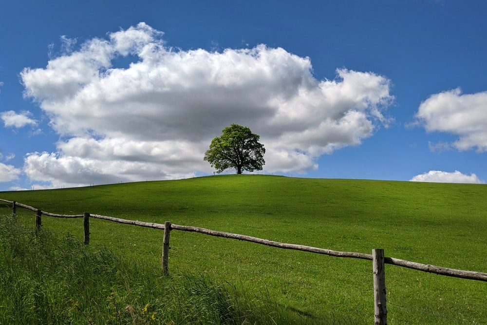green grass field with tree under white clouds and blue sky during daytime
