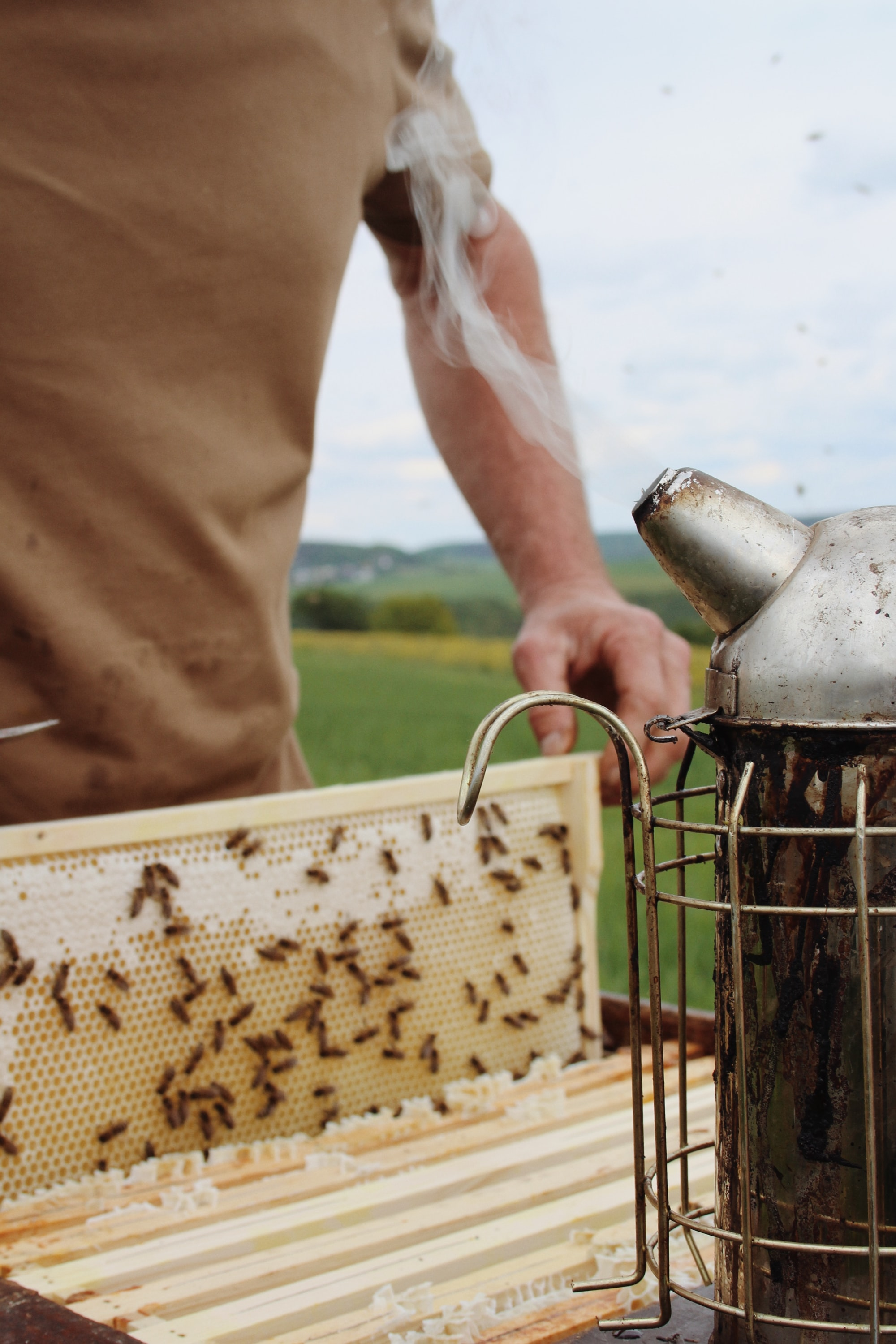 Beekeeper at work with his smoker tool