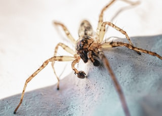brown spider on white textile