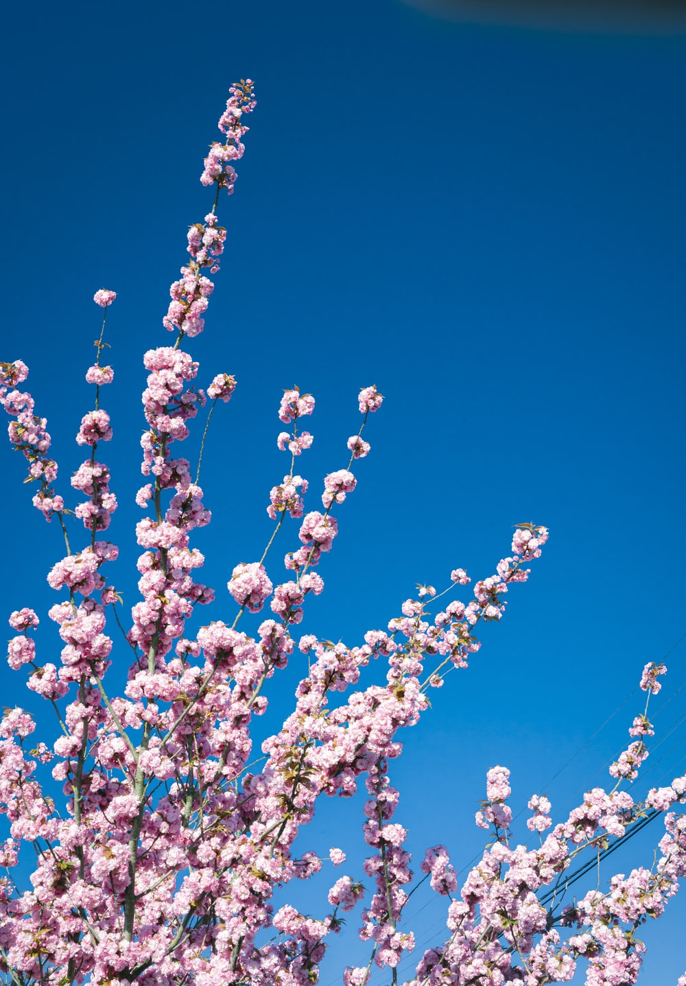 white and pink flower under blue sky during daytime