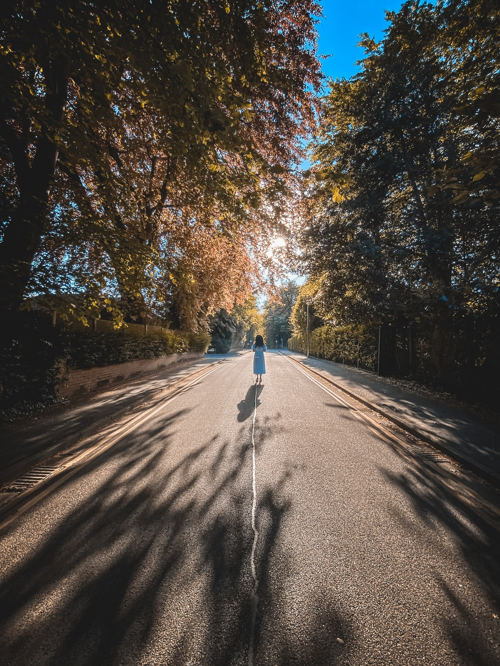 person walking on road between trees during daytime