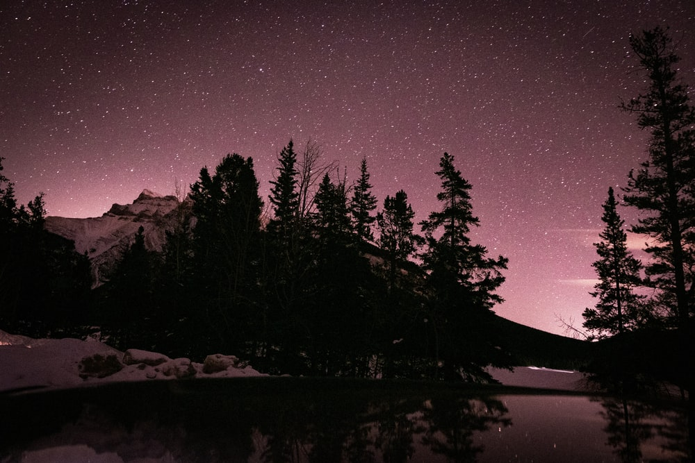 silhouette of trees near body of water during night time