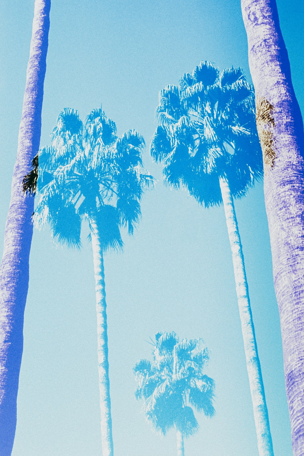 low angle photography of green palm trees under blue sky during daytime