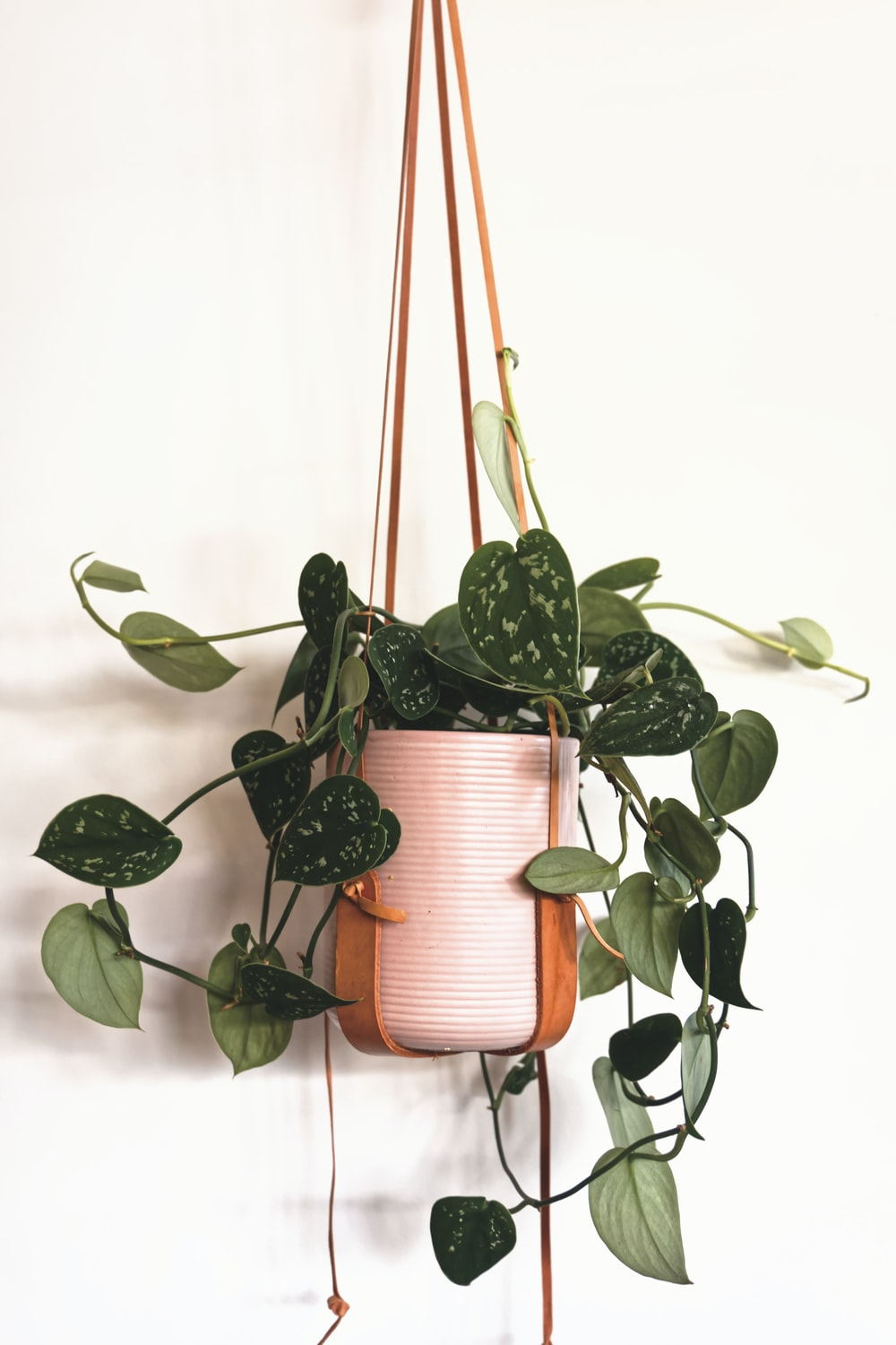 green plant in brown pot