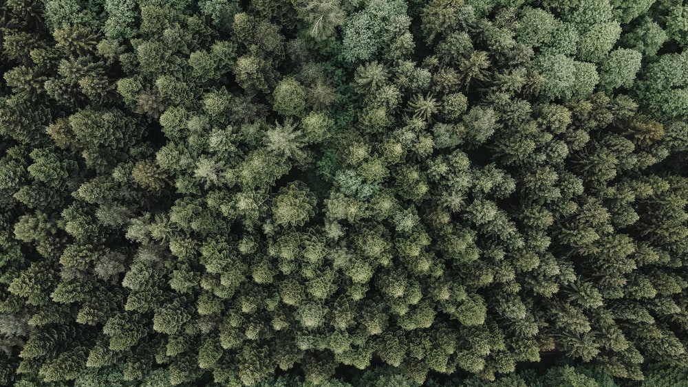 green trees in aerial view