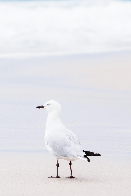 white bird on snow covered ground during daytime
