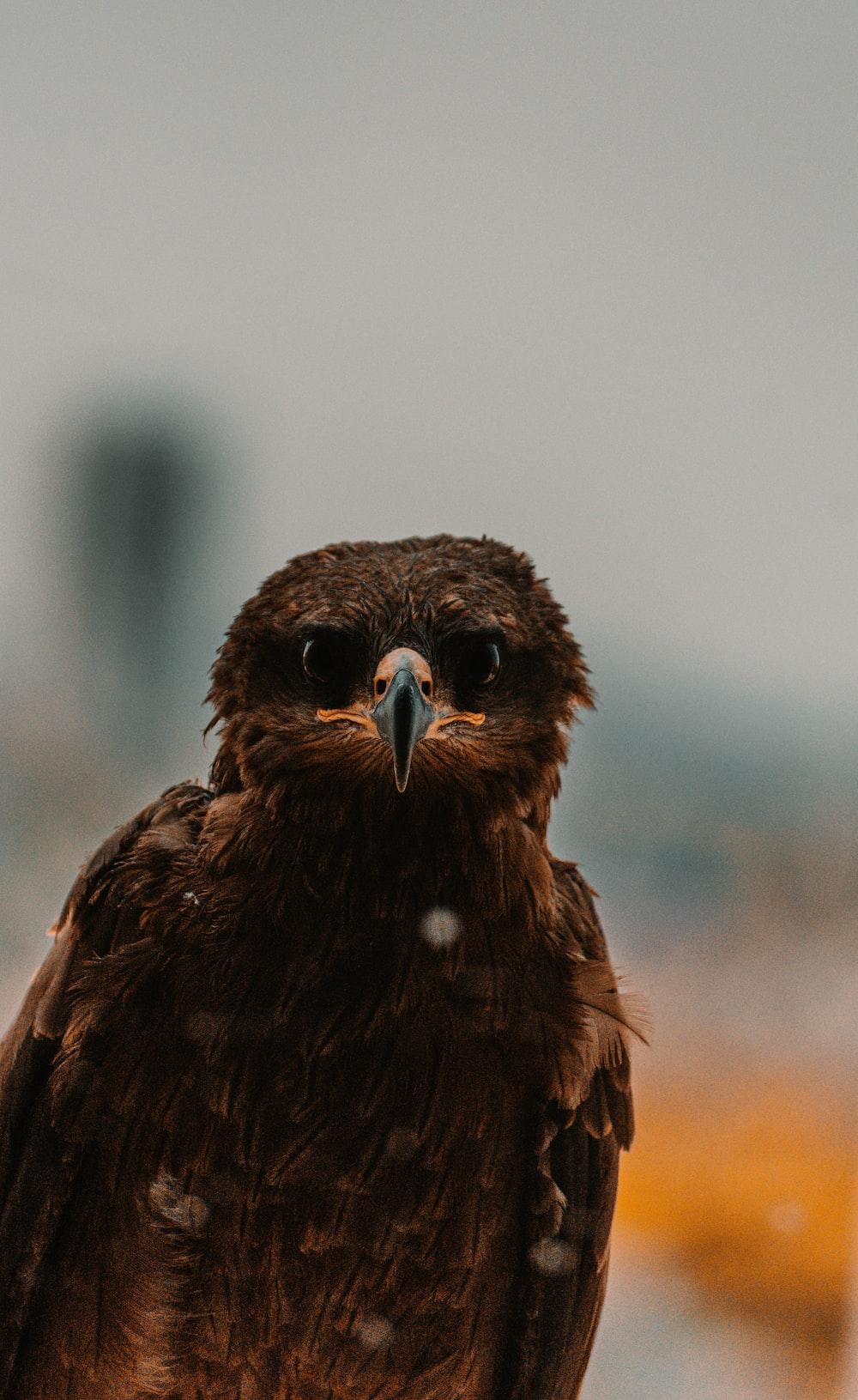 brown and black bird in tilt shift lens