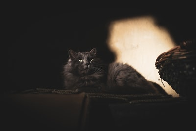 black cat on black textile