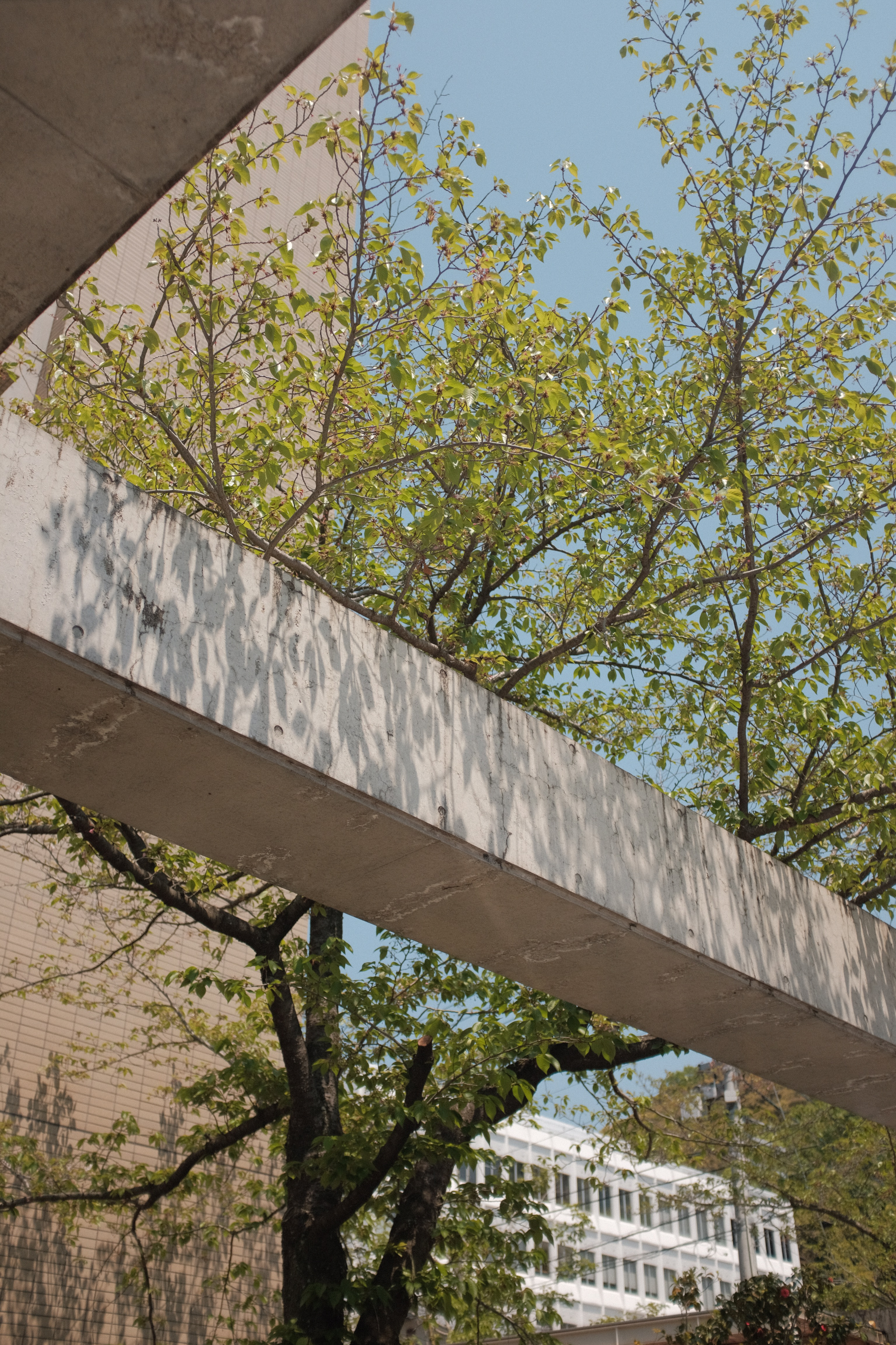 green trees beside gray concrete wall