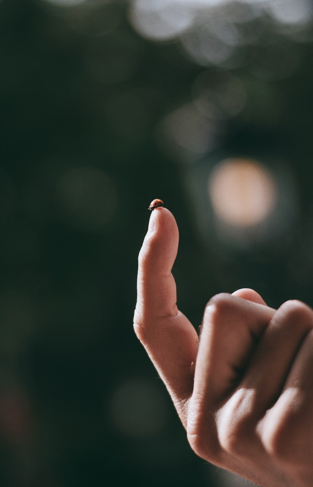 person holding gold ring in bokeh photography