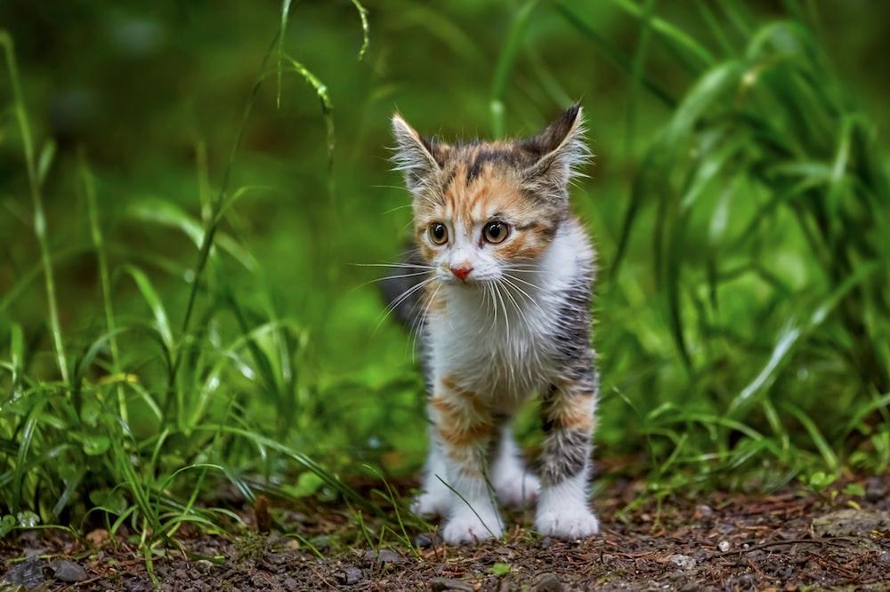 white and brown kitten on brown soil