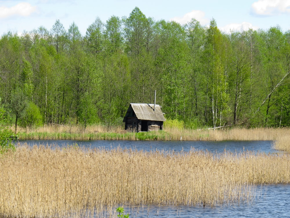 brown wooden house on green grass field near lake during daytime