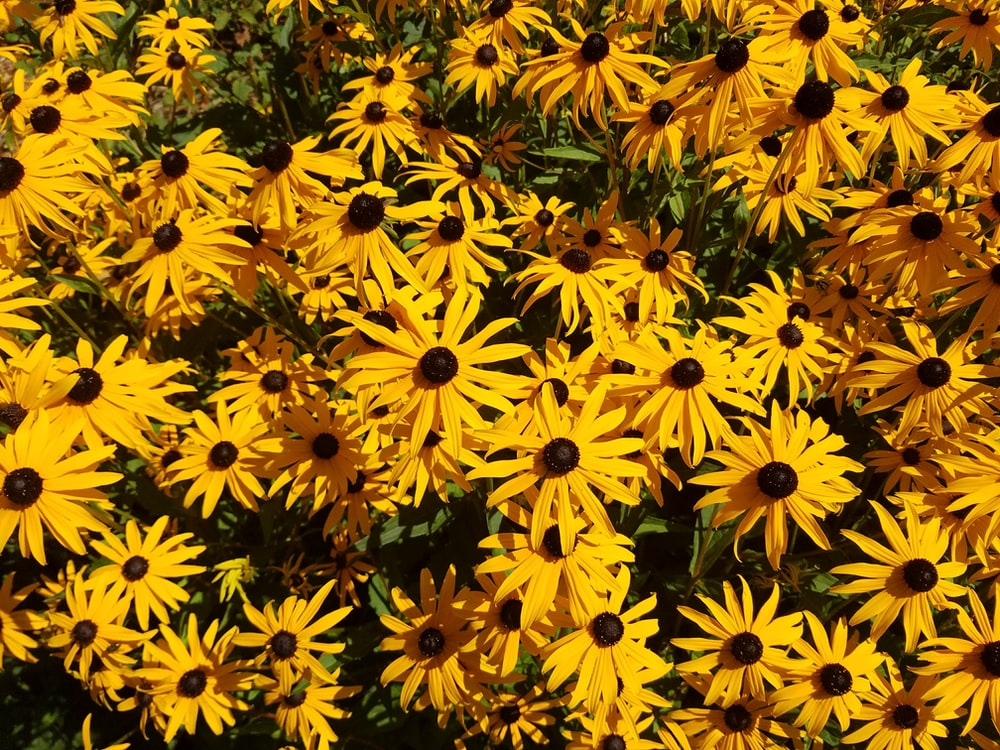 yellow flowers in bloom during daytime