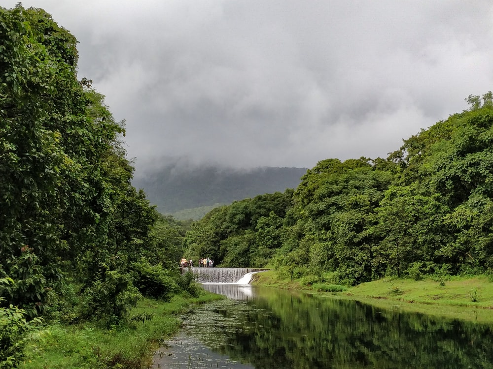 green trees near river under cloudy sky during daytime