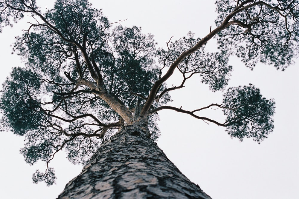low angle photography of green tree under white sky during daytime