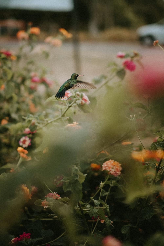 green bird flying over red flowers