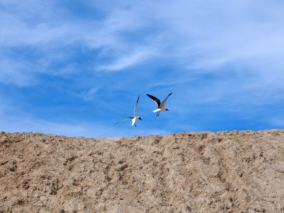 Seagulls taking flight at the beach