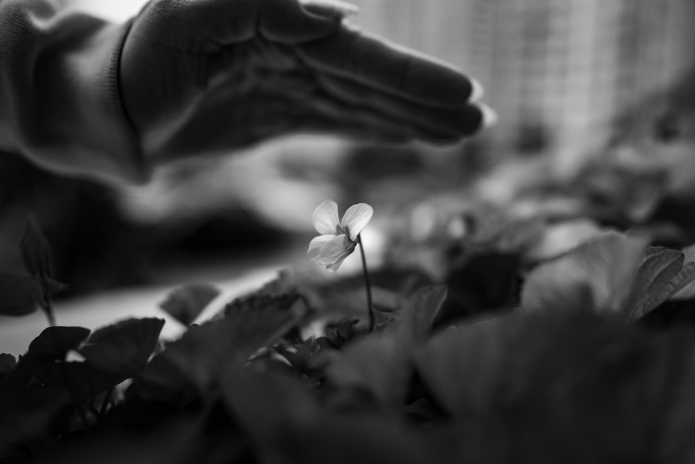 grayscale photo of flower in front of window