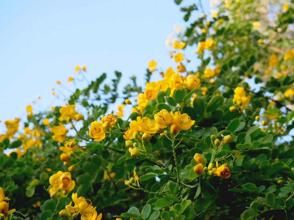 yellow flowers with green leaves during daytime