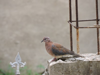 brown and blue bird on gray concrete fence during daytime ghana teams background