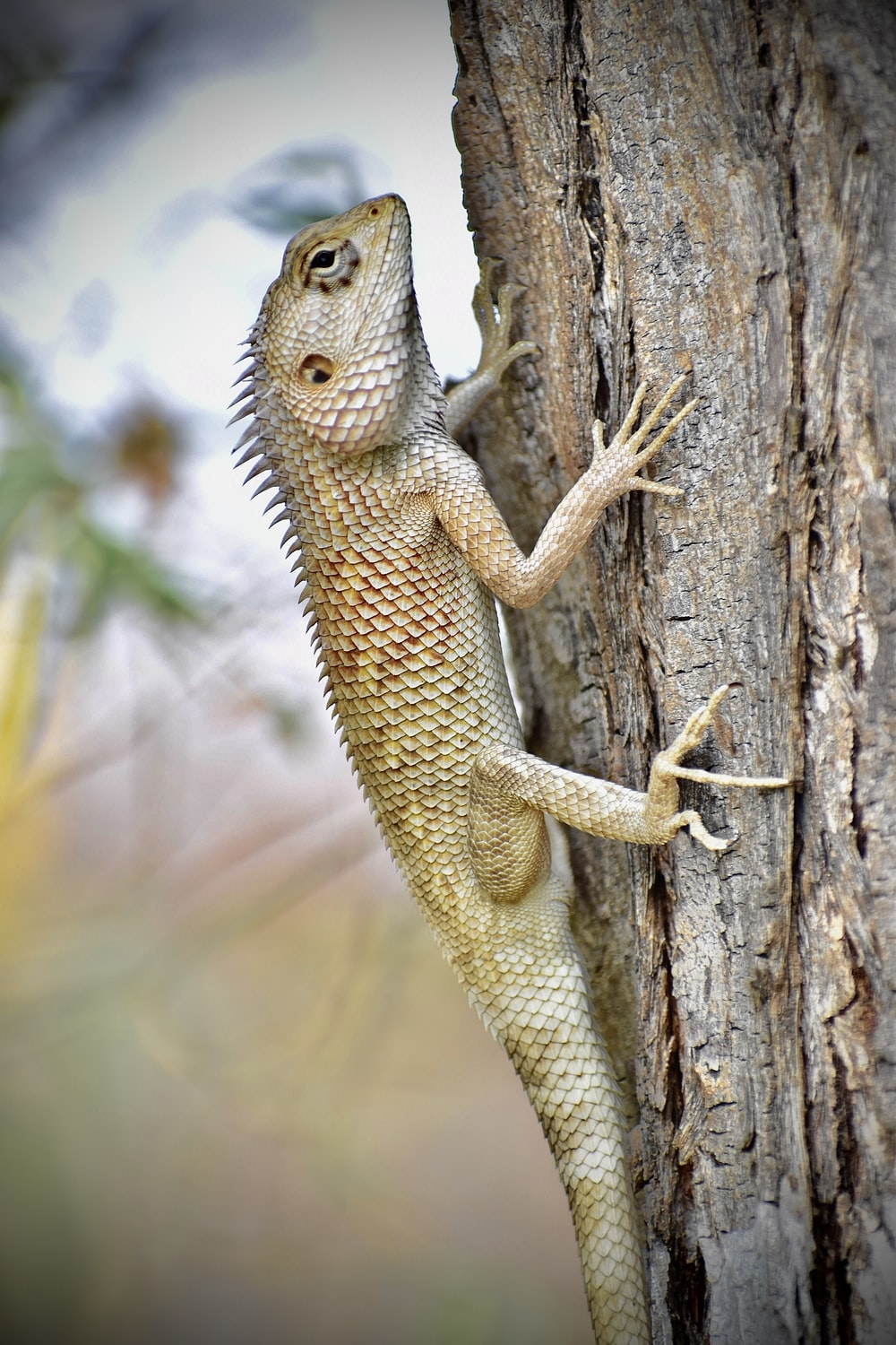 brown and white bearded dragon on brown tree trunk during daytime