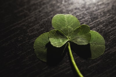 green leaf on black wooden table luck teams background
