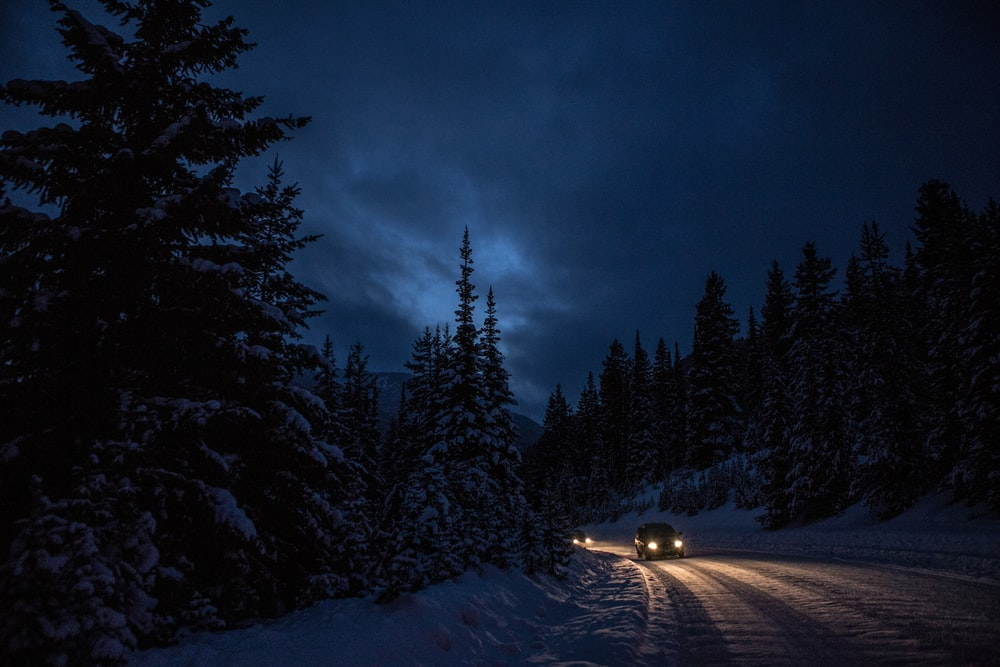 snow covered pine trees during night time