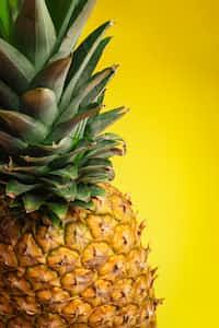 fruit fact 1 food stories