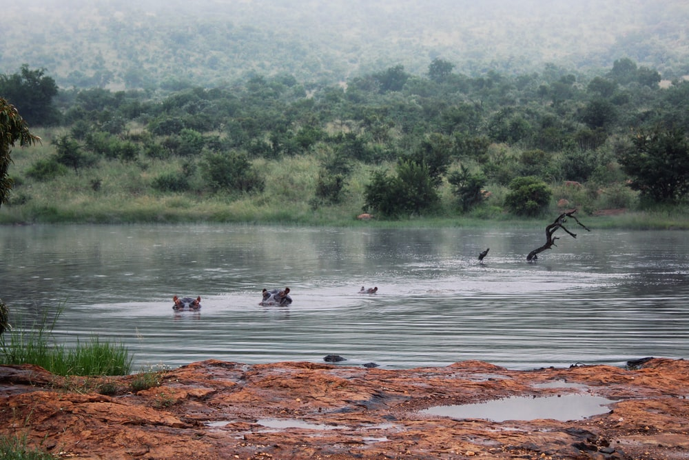 flock of birds on river during daytime