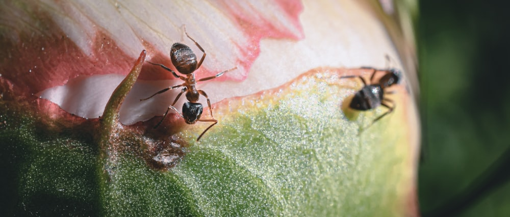 black ant on green leaf
