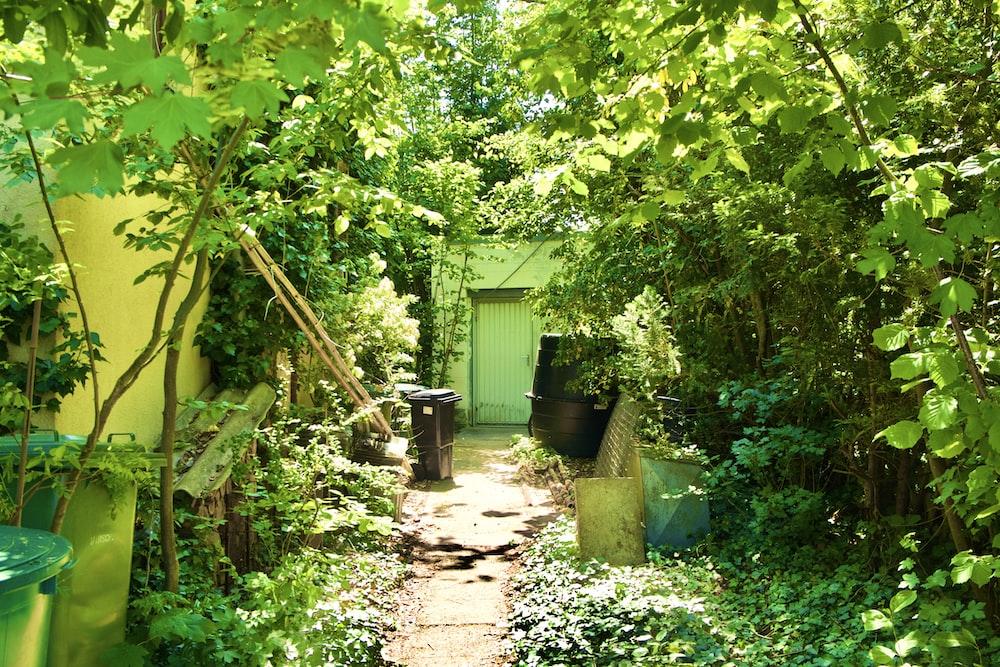 green leaf tree near green wooden house