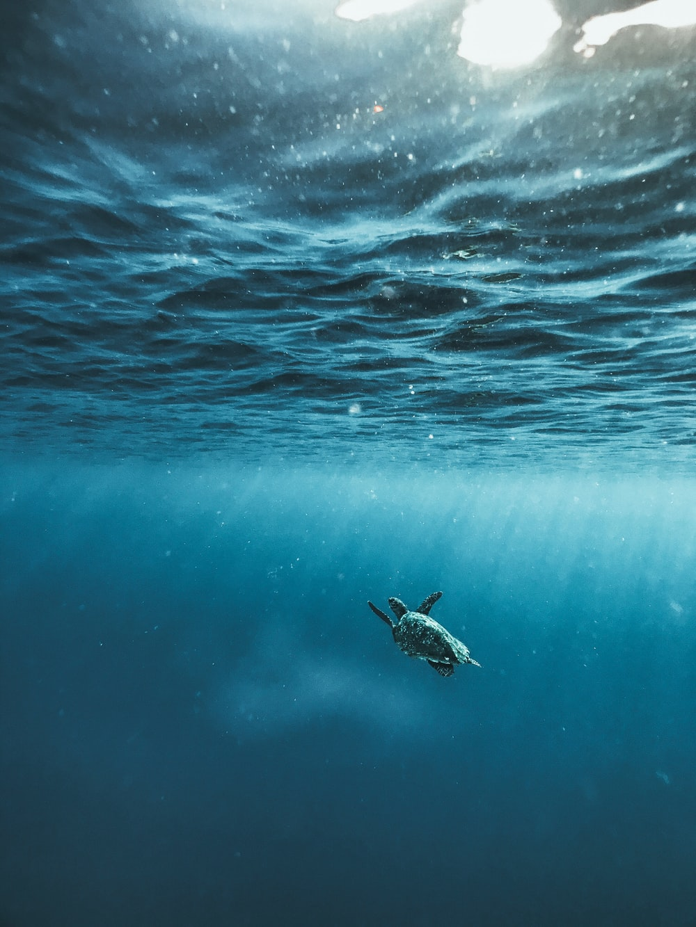 100 Underwater Images Download Free Images Stock Photos On Unsplash