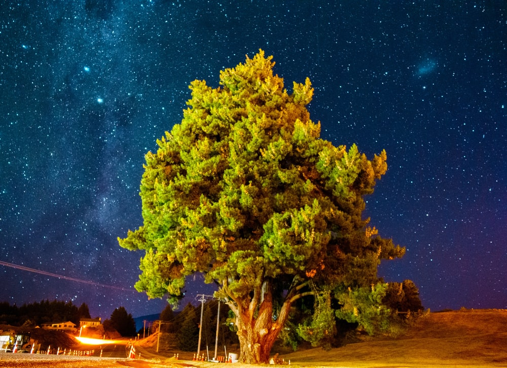 green tree on green grass field during night time
