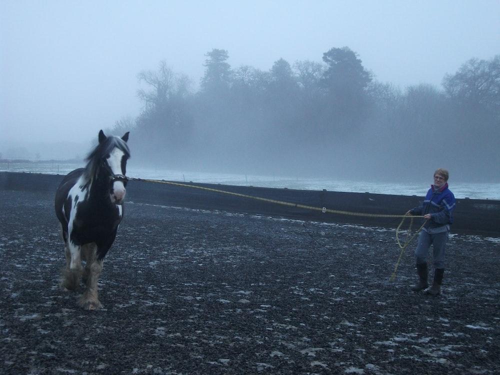 black and white horse running on gray asphalt road during daytime