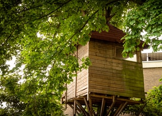 brown wooden house with green tree