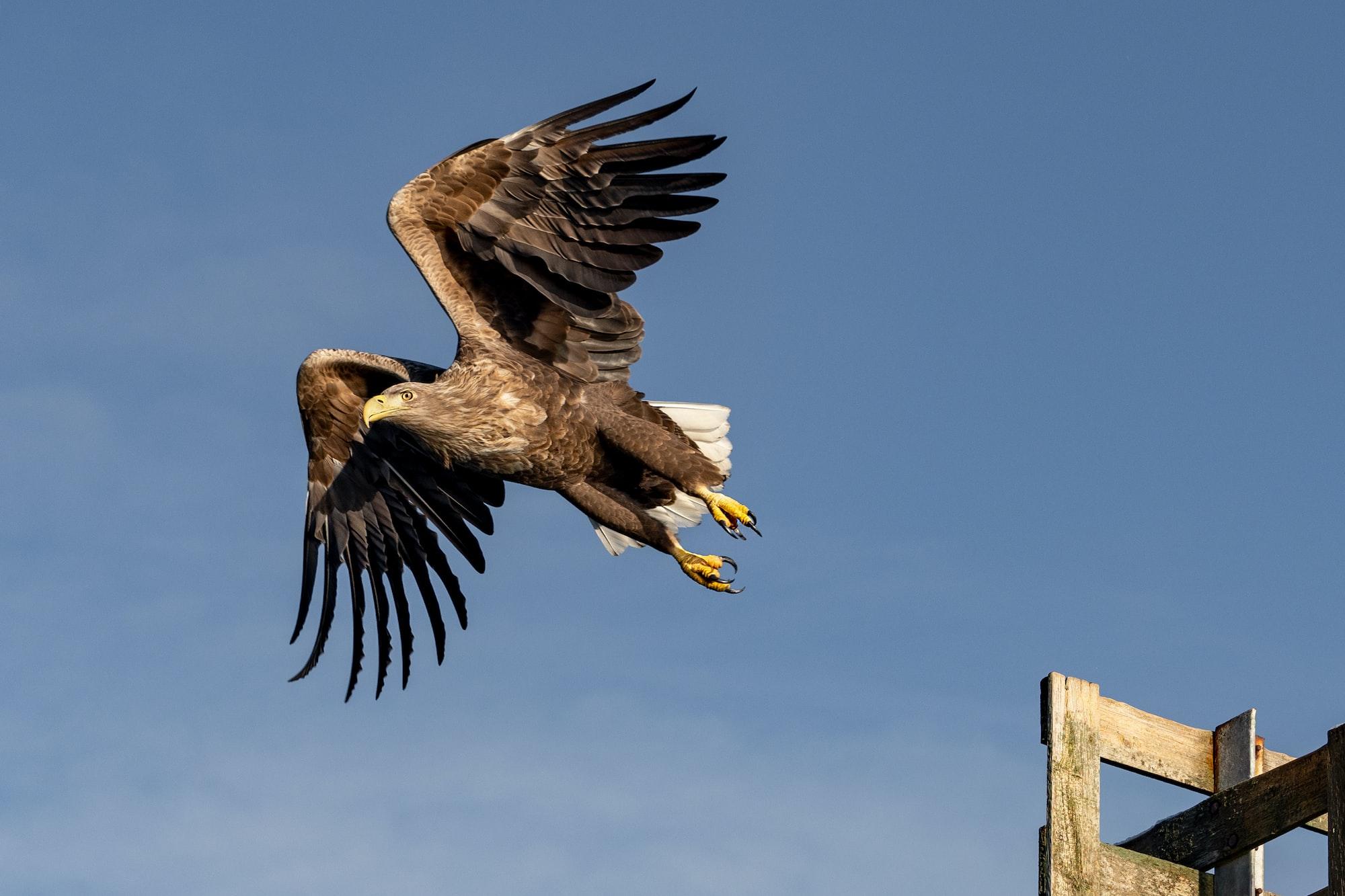 Wildlife reintroduction newsround