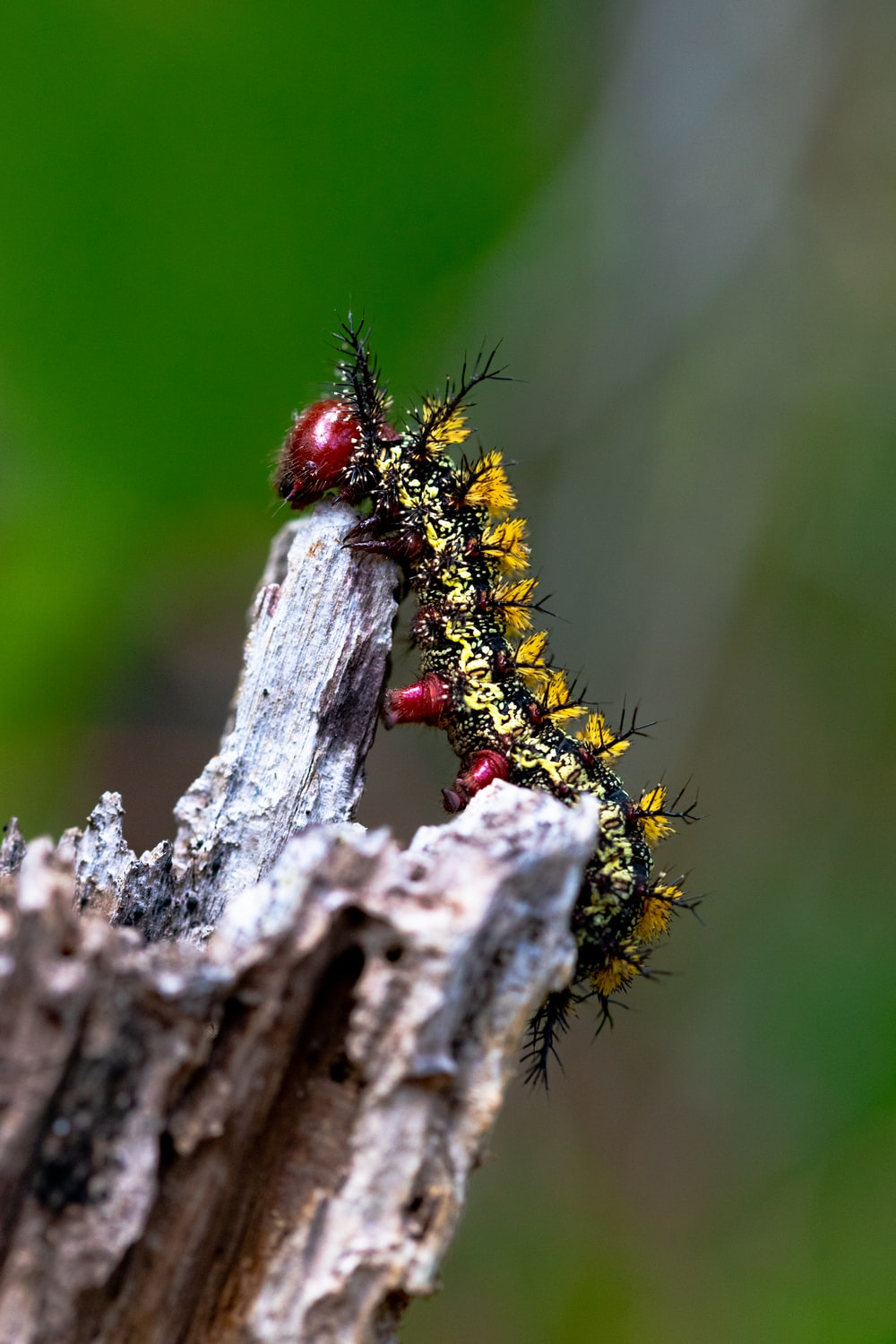 brown and black caterpillar on gray wood