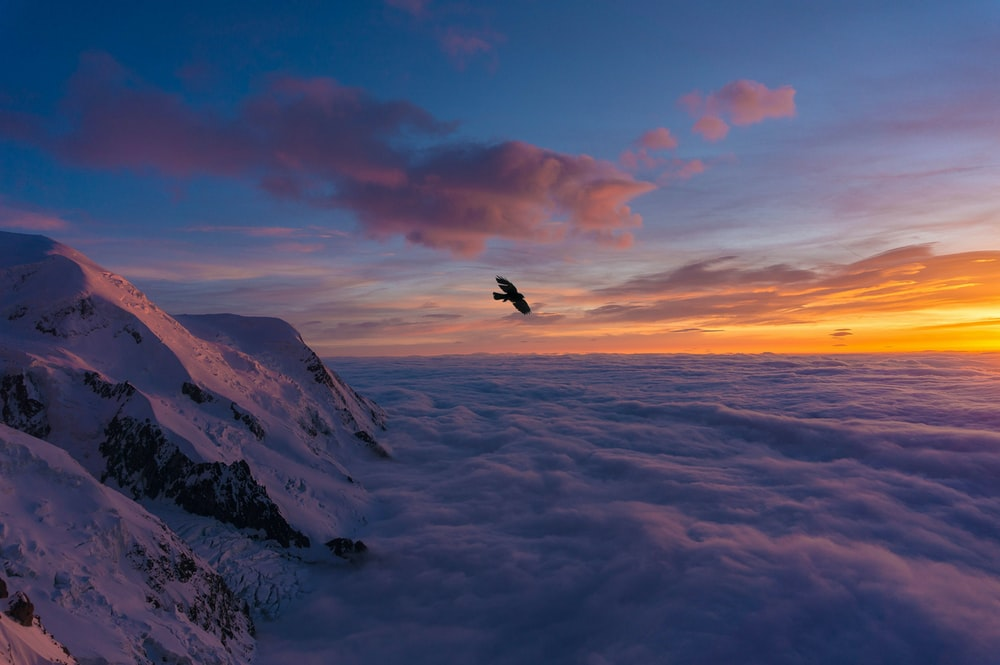 bird flying over snow covered mountain during daytime