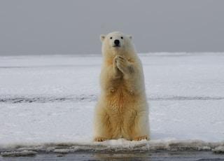 polar bear on snow covered ground during daytime