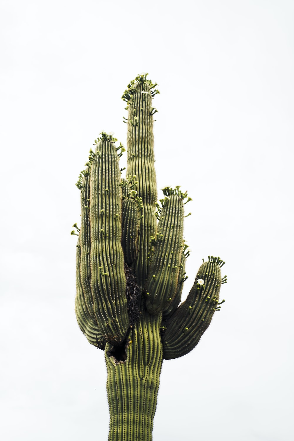green cactus plant in grayscale photography