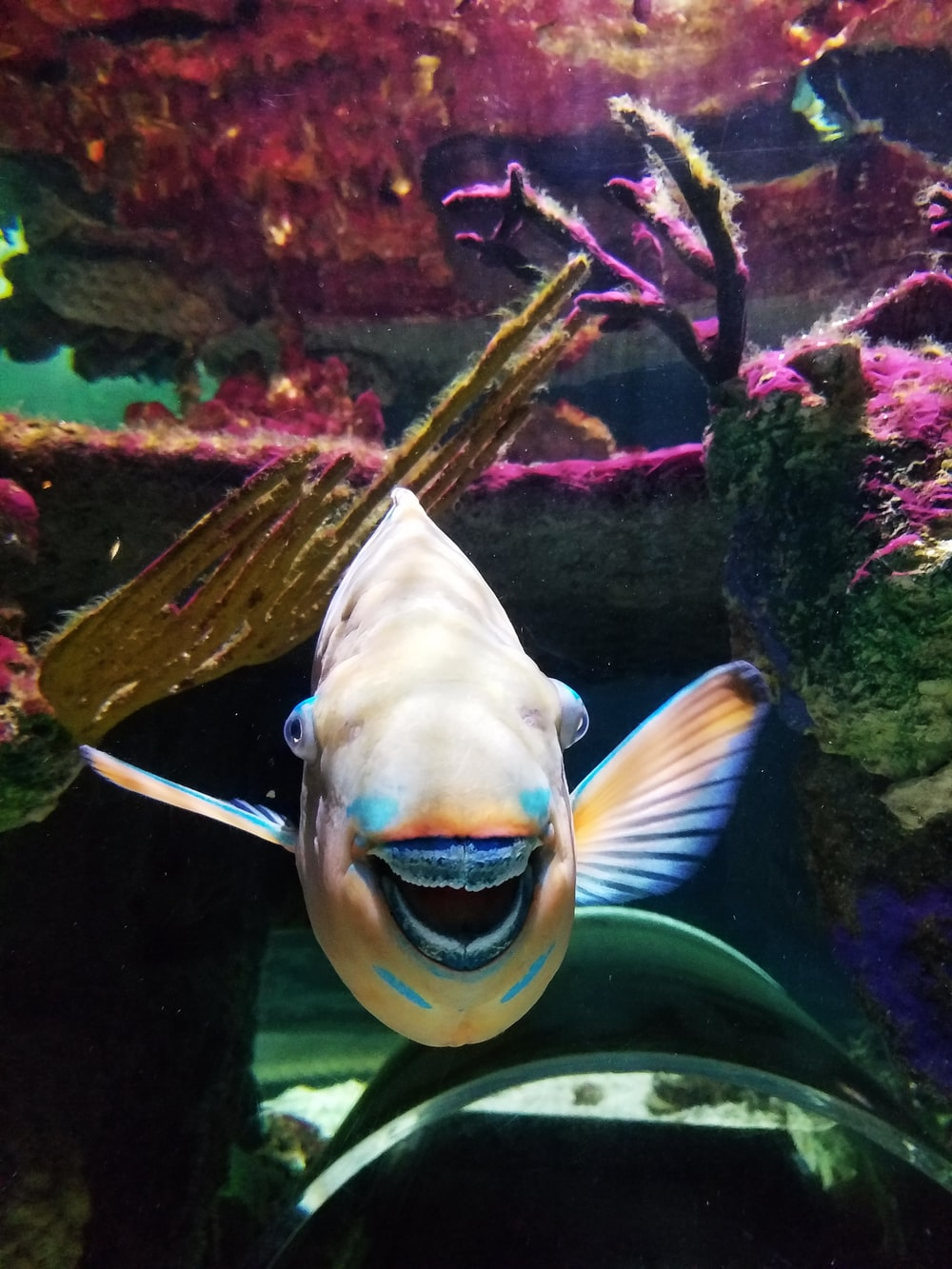 yellow and white fish in fish tank