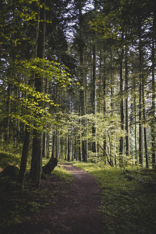 green trees on brown soil