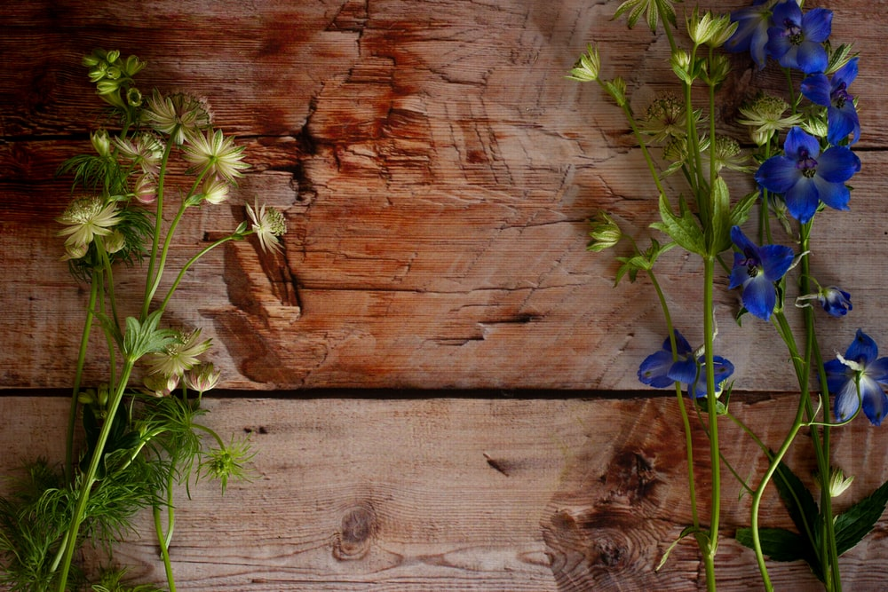 blue flower on brown wooden surface