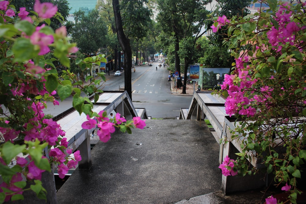 pink flowers on gray concrete pathway