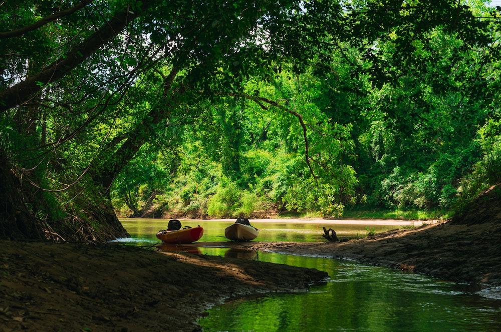 flock of ducks on river during daytime