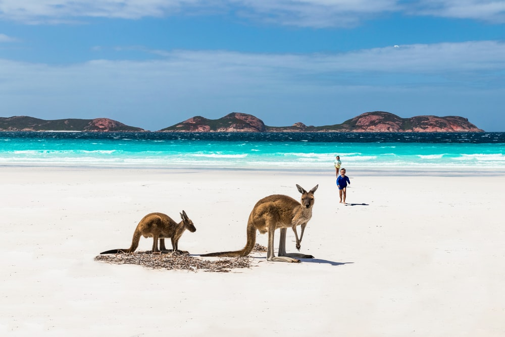 brown deer on white sand beach during daytime