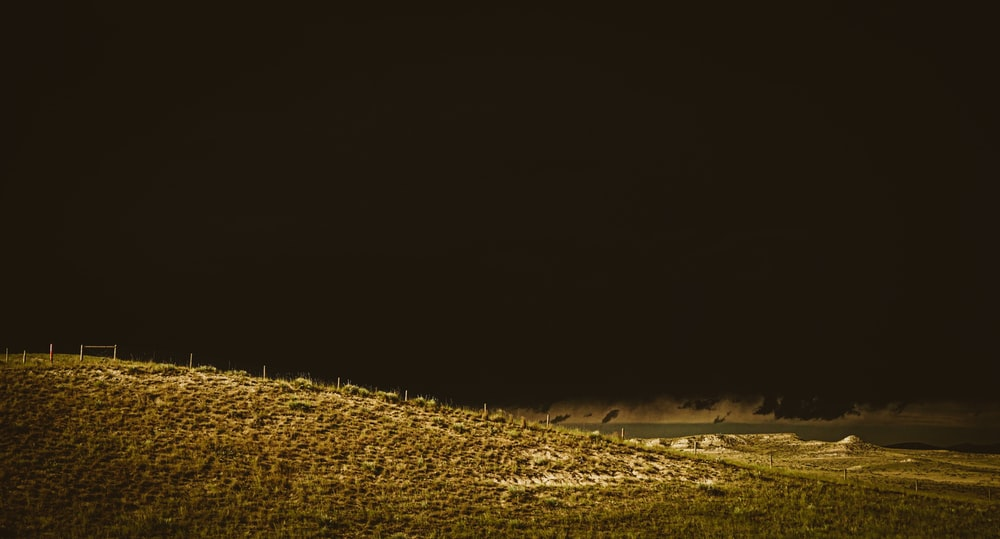 brown grass field during daytime